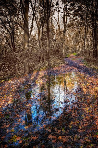 De herfst van het Beusebos van Jan vd Knaap