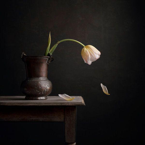 Tulpe von Carolien van Schie
