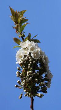blossom von Yvonne Blokland
