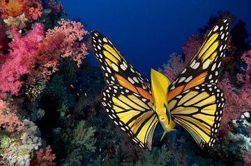 vlinder vis van Dray van Beeck