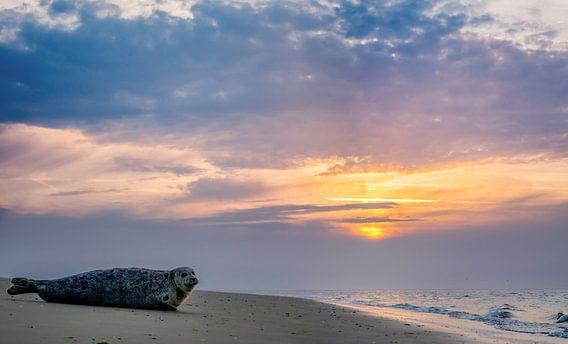 Zeehond Texel zonsondergang van Texel360Fotografie Richard Heerschap