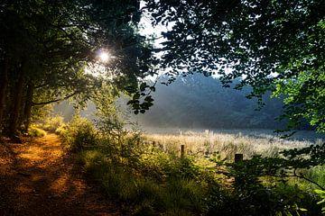 Die aufgehende Sonne an einem schönen frühen Frühlingsmorgen. von Henk Van Nunen