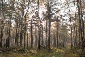 Licht door de bomen von Hans Krenger