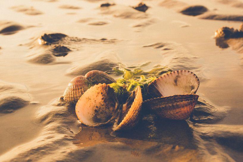 Strandvondst van Wolbert Erich