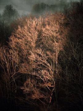 Kaal winterbos van Max Schiefele