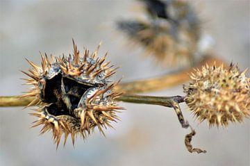 Close up van een uitgebloeide plant von Lisanne Rodenburg