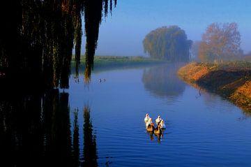 Vijf ganzen onderweg in de Linge bij Doornennburg van Joyce Derksen