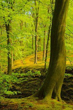 Boom in de lente von Michel van Kooten