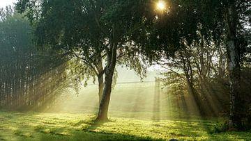 Zon en mist sur Dirk van Egmond