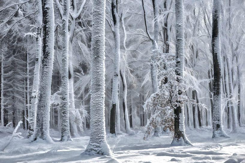 Cold is Coming van Lars van de Goor