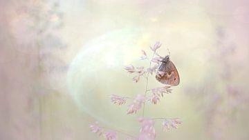 Vlinder in dromenland van Francis Dost
