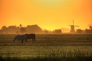 Zonsopkomst in Nederland van