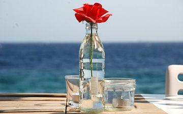 Rose am Meer von Carolina Vergoossen
