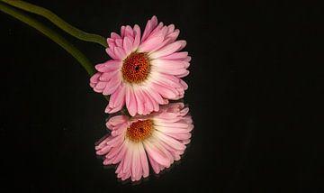 bloemspiegel von Pieter Heres