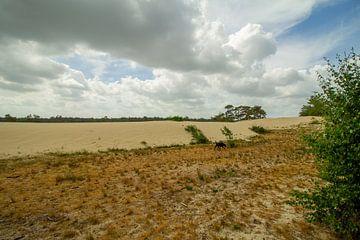 Loonse en drunense duinen met zon door de wolken van Marco Leeggangers