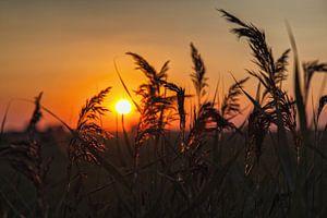 Zonsondergang door het riet bij Dorkwerd