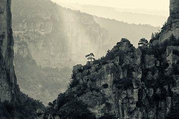 Der einsame Baum von Halma Fotografie