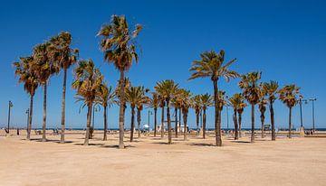 Strand Valencia sur Arno Litjens