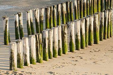 Twee rijen wit groene paalhoofden op een strand in Zeeland van