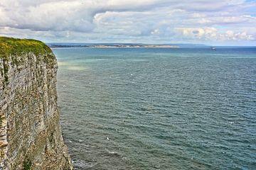 Bempton Cliffs von Gisela Scheffbuch
