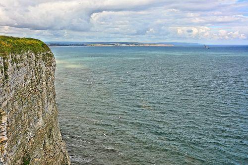 Bempton Cliffs van Gisela Scheffbuch