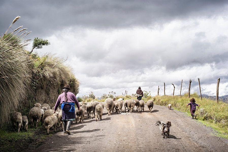 Schapen herders in Ecuador