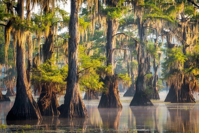 Ochtendgloed in de moerassen van Texas van Edwin Mooijaart