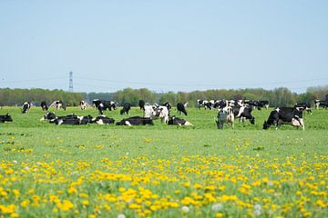 Koeien  von Quick Fotografie