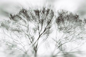 Bomen in beweging van Sanneke Kortbeek
