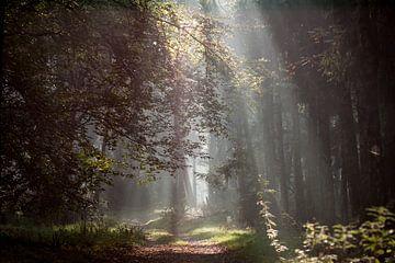 zonnestralen wijzen de weg van P Leydekkers - van Impelen