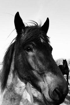 Pferde auf einer Wiese von Marie-Claire Aling
