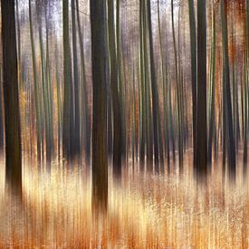 Herfstbos van Violetta Honkisz