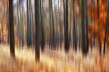 Herbstwald von Violetta Honkisz