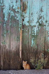 Kitten voor schuurdeur