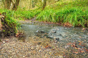 Loop van de beek in het bos van Martin Haunhorst