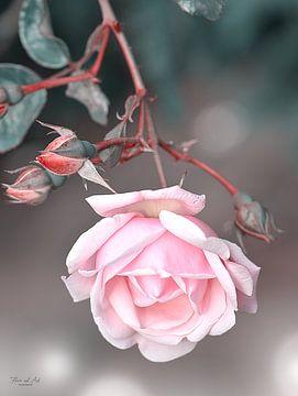 Blühende Rose von Flower and Art