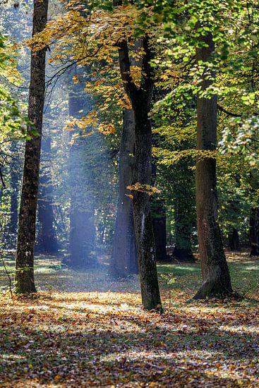Sonnenstrahl van Thomas Klinder