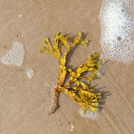 Zeewier op het strand. van Johan Zwarthoed
