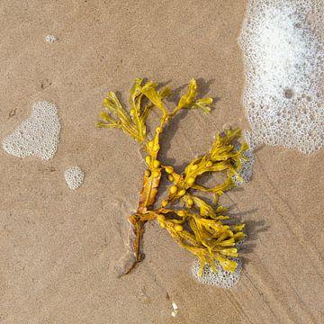 Meeresalgen am Strand. von Johan Zwarthoed