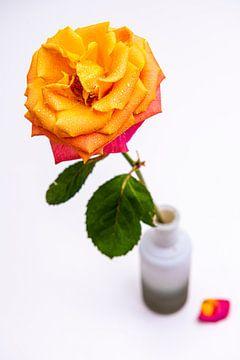 Rose in Vase und Wassertropfen von Roland de Zeeuw fotografie