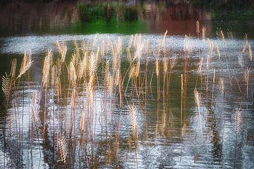 Reflecties in het water van Els Hattink