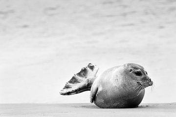 Zeehond op strand van Caroline De Reus