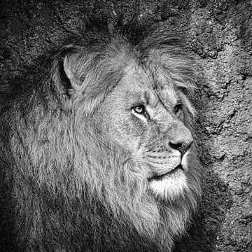 Leeuw in zwart wit