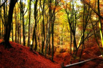 Herfstbos, kleuren van de herfst / autumn wood van Cocky Anderson