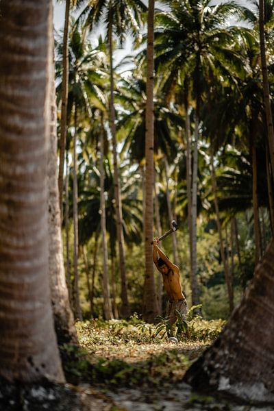 Werken op de kokosnootplantage in de Filipijnen van Yvette Baur
