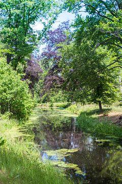 riviertje in de natuur met diverse bomen zoals een berk van Compuinfoto .