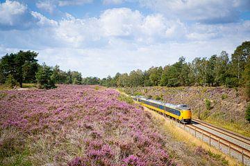 Een Intercity trein langs de heide bij Halte Assel van