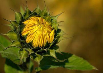 Zonnebloem in de herfst von Ellen Driesse