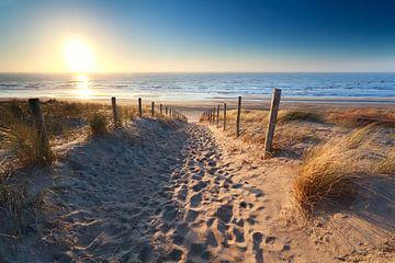 Gold beach sur