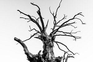 Dead Branches van Jack Turner